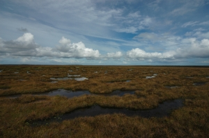 Dubh lochans in Munsary Peatlands Reserve in Caithness (c) Plantlife